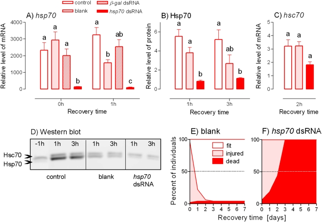 RNAi suppression of heat shock-induced up-regulation of PaHsp70 expression and its effect on survival. Relative levels of Pahsp70 mRNA (A), PaHsp70 protein (B) and Pahsc70 mRNA (C) were measured in the fat bodies of male Pyrrhocoris apterus at different times of recovery after the heat shock (+41°C for 1 h). The insects were either untreated (control) or injected two days prior to heat shock with: 2 µL of the injection buffer alone (blank); 2 µL (10 µg) of ß-galactosidase ( ß-gal ) dsRNA; or 2 µL (2 µg) of Pahsp70 dsRNA. Each column is a mean±S.E.M. of 3–4 independent samples (5 fat bodies per sample). The differences in mRNA levels were assessed by ANOVA followed by Tukey's multiple comparison test at p = 0.05 (columns flanked by different letters differ significantly). (D) An example of Western blotting. (E, F) Survival in blank-injected (E, n = 39) and Pahsp70 dsRNA-injected (F, n = 40) insects after a severe heat shock (+45°C for 3 h) were assessed during recovery at 25°C for 7 days. The fit insects were those showing normal, rapid and coordinated crawling; the injured insects displayed signs of heat injury, i.e. slow, uncoordinated crawling or movements of body appendages only; and the dead insect did not respond to stimulation with a fine paintbrush. See Fig. 1 for more information.