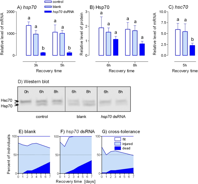 RNAi suppression of cold exposure-induced up-regulation of PaHsp70 expression and its effect on survival. Relative levels of Pahsp70 mRNA (A), PaHsp70 protein (B) and Pahsc70 mRNA (C) were measured in the fat bodies of male Pyrrhocoris apterus at different times of recovery after the cold exposure to −5°C for 5 d. The insects were either untreated (control) or injected two days prior to heat shock with: 2 µL of the injection buffer alone (blank); or 2 µL (2 µg) of Pahsp70 <t>dsRNA.</t> (D) An example of Western blotting. (E, F) Survival in blank-injected (E, n = 49) and Pahsp70 dsRNA-injected (F, n = 48) insects after the cold exposure. (G) Cross-tolerance was assesed by observing the survival in insects ( n = 48) that were pretreated with a mild heat shock <t>(+41°C</t> for 1 h) prior to the cold exposure to −5°C for 5 d. See Figs. 1 and 2 for more information.