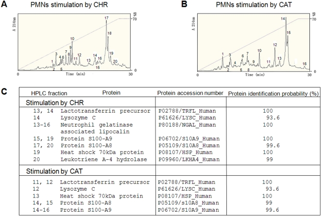 <t>HPLC</t> of proteins in PMNs secretions induced by CHR and CAT and implication for innate immunity. A, B) Secretion from PMNs (1.10 8 cells) was induced during 30 min stimulation by (A) 20 µM CHR or (B) 20 µM CAT. The secreted proteins > 3 kDa were purified by RP-HPLC on a Macherey Nagel reverse-phase C18 column (4×250 mm; particle size 5 µM and pore size 100 nm). Numbered peaks in the chromatograms indicate protein fractions subjected to proteomic analyses. (C) Proteomic identification by <t>NanoLC-MS/MS</t> analysis of protein fractions involved in innate immunity (protein identification probability > 93%). The numbered HPLC fractions correspond to the peaks of secreted protein in the chromatograms presented in A and B, respectively.