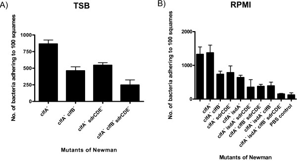 Adherence of Newman mutants to desquamated nasal epithelial cells . The ability of (A) Newman clfA , Newman clfA clfB , Newman clfA sdrCDE and Newman clfA clfB sdrCDE grown to exponential phase in TSB and (B) Newman, Newman clfA , Newman clfA clfB , Newman clfA sdrCDE , Newman clfA isdA , Newman clfA isdA sdrCDE , Newman clfA clfB sdrCDE , Newman clfA isdA clfB , and Newman clfA isdA clfB sdrCDE grown to stationary phase in RPMI to adhere to desquamated human nasal epithelial cells was measured. The tenth track is a control without S. aureus showing background due to adherent bacteria from the donor. Counts represent the number of bacterial cells adhering to 100 squamous cells. Results are expressed as the mean of triplicate experiments +/- standard deviations.