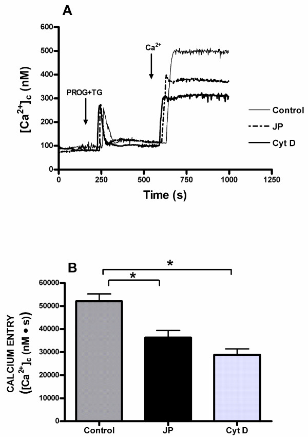 Effects of cytochalasin D and jasplakinolide on progesterone induced calcium entry in human spermatozoa from normospermic patients . (A) Fura-2-loaded human spermatozoa were preincubated at room temperature in the presence of 10 μM cytochalasin (Cyt D) for 40 min or 10 μM jasplakinolide (JP) for 30 min. Cells were then stimulated with 20 μM progesterone (PROG) plus 1 μM thapsigargin (TG) in calcium-free medium (+ 100 μM EGTA), and 6 min later CaCl 2 (300 μM) was added to the medium to initiate calcium entry. Traces are representative of seven independent experiments. (B) Histogram represents the integral for 2.5 min of the amount of calcium entry, calculated as described in Methods section. Values are means ± SD of seven independent experiments. * P