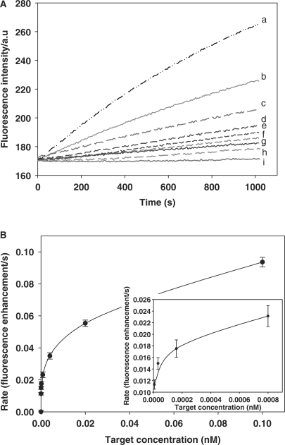 Detection of different concentrations of target based on isothermal strand-displacement polymerization reaction. Experiments were performed in the presence of 15U polymerase Klenow fragment exo − and 100 μM dNTPs with 5 × 10 –8 M probe, 5 × 10 –8 M primer, and different concentrations of target. ( A ) Monitoring the fluorescence intensity of this amplified DNA detection method over a range of target DNA concentrations. The curves from a to i contain the target with 1.0 × 10 –10 , 2.0 × 10 –11 , 4.0 × 10 –12 , 8.0 × 10 –13 , 1.6 × 10 –13 , 3.2 × 10 –14 , 6.4 × 10 –15 , 1.28 × 10 –15 and 0 M, respectively. All samples were incubated at 37°C. ( B ) The relationship of the rate of fluorescence enhancement with target DNA concentration.