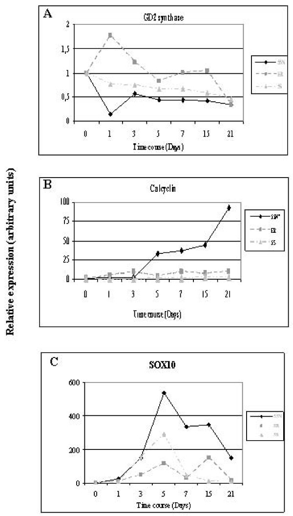 Quantitative RT-PCR analysis of gene expression changes induced by BrdU treatment in NB cell line subtypes . Gene expression changes of GD2 synthase ( A ), calcyclin ( B ) and Sox10 ( C ) in LA1-55N, LA1-5S and SK-N-ER cells. q-RT-PCR was performed by triplicate of two separate differentiation experiments (21 days induction).