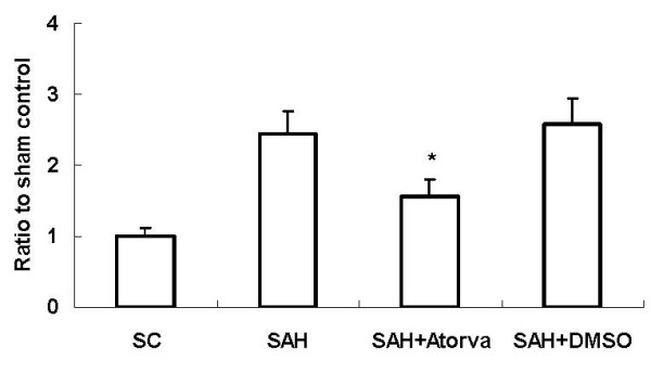 Cell death assay of DNA-fragmentation after SAH . The results showed that apoptotic-related DNA-fragmentation was increased significantly in SAH rats compared with that in SC rats at 24 hour in basal cortex. Atorvastatin decreased the DNA-fragmentation markedly (*, P