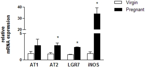 Quantitative real-time RT-PCR for the Ang II receptors (AT1 and AT2), the relaxin receptor (LGR7), and iNOS in MCs isolated from virgin and pregnant rats. Total RNA was isolated from pooled cells that were obtained from three or four culture flasks from each group. Individual samples were normalized to β-actin mRNA levels and the data are expressed as the mRNA expression relative to the virgin group. Values represent the mean±SEM of six samples/group. *p