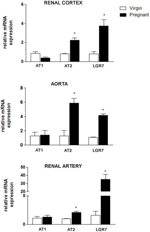 Quantitative real-time RT-PCR for AT1, AT2, and LGR7 in the renal cortex, the aorta, and the renal artery of virgin and pregnant rats. Individual samples were normalized to β-actin mRNA levels and data are expressed as the mRNA expression relative to the virgin group. Values represent the mean±SEM of six samples/group. *p