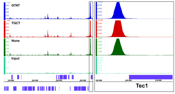 Ste12 distribution during pseudohyphal growth is similar across three different biological replicates . Two barcoded replicates (Ste12_Rep2, dark blue; Ste12_Rep1, red) and a non-barcoded replicate (Ste12_Rep3, green) were compared to input DNA (light blue). Ste12 ChIP samples were scored against a pool of input DNA. IGB signal tracks of chromosome 2 between 340,000 and 410,000 are shown for each sample. Axis and scale normalizations are similar to Figure 2 . A box in the left panel containing the TEC1 gene and its surrounding intergenic region was enlarged in panel B and rescaled to emphasize the strong signal at the TEC1 promoter. The same normalization as in Figure 2 was applied. Ste12p and Tec1p act as a dimer during pseudohyphal growth [ 31 ].