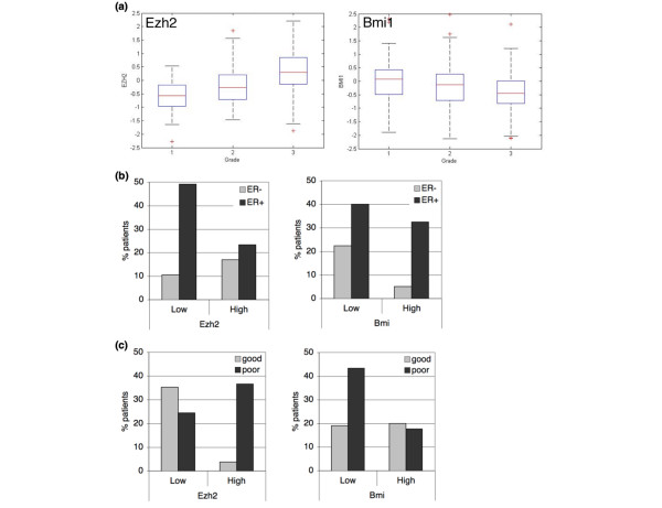 EZH2 and BMI1 inversely correlate with variables associated with survival . (a) EZH2 and BMI1 distribution differ by grade. Mean EZH2 mRNA levels are -0.62 (n = 75), -0.21 (n = 101) and 0.37 (n = 119) for grades 1, 2 and 3, respectively (p