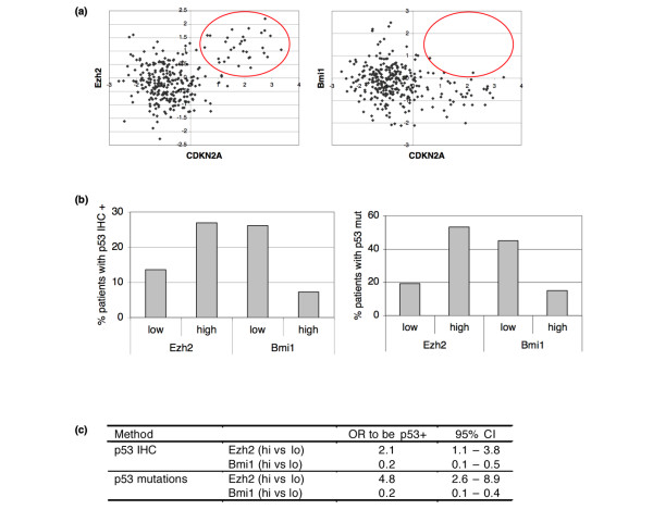 Differential effect of BMI1 and EZH2 on INK4a/ARF locus and association with TP53 mutations . (a) Dotplot of INK4a/ARF (CDKN2A) expression versus BMI1 and EZH2 expression. INK4a/ARF expression is not found in tumours with high BMI1 mRNA, whereas it does occur in tumours with high EZH2 (red circle). (b) Distribution of patients with positive TP53 staining (mutated TP53) differs by categorised EZH2 and BMI1 levels. TP53 immunohistochemistry (IHC) data was obtained from 273 patients and the TP53 sequence was analysed in 204 tumours. The distribution of mutant TP53 shows a similar pattern (TP53 mutation). (c) Logistic regression analysis of TP53 IHC and sequence status on EZH2 and BMI1 levels. CI = confidence interval, OR = odds ratio.