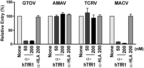 AMAV and TCRV pseudovirus entry does not depend on human TfR1. HEK293T cells were infected with GTOV, AMAV, TCRV, or MACV pseudoviruses expressing GFP in the presence or absence of the indicated concentrations of an α-human TfR1 (BD Pharmingen) or a control (α-HLA) antibody (BD Pharmingen). Infection levels were assessed 48 hr later by measuring GFP expression by flow cytometry. Mean fluorescence values were normalized to that of cells infected in the absence of antibody. GFP mean fluorescence values for virus entry in the absence of antibody were 144.0, 89.7, 92.3, and 115.0 for GTOV, AMAV, TCRV, and MACV, respectively.
