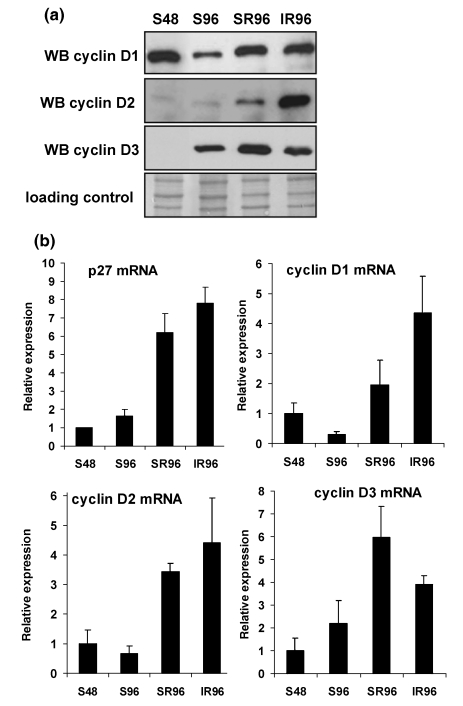 Expression of D-type cyclins Cells were cultured according to protocols outlined in Fig. 1a . (a) Amounts of cyclins D1, D2 and D3 in protein samples were quantified by Western blotting. Data are representative of four independent replicates. (b) Expression of mRNA coding for p27, cyclins D1, D2 and D3 was quantified using quantitative real-time RT-PCR. Data represent means ± SDs of four independent replicates.