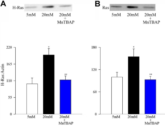Effect of MnTBAP on glucose-induced activation of H-Ras. Endothelial cells were incubated in 5 mM glucose or 20 mM glucose medium for 96 h in the presence or absence of 200 μM MnTBAP for 96 h. Activation of H-Ras was estimated by ( A ) Western blot technique and <t>Raf-1</t> ( B ) binding assay. Each experiment was repeated with at least three separate cell preparations. The histogram represents the ratio of the densities of H-Ras and β-actin in the same lane as quantified using Un-Scan-It gel software. The values obtained from the cells incubated in 5 mM glucose conditions are considered 100%. Asterisk (*) marks p
