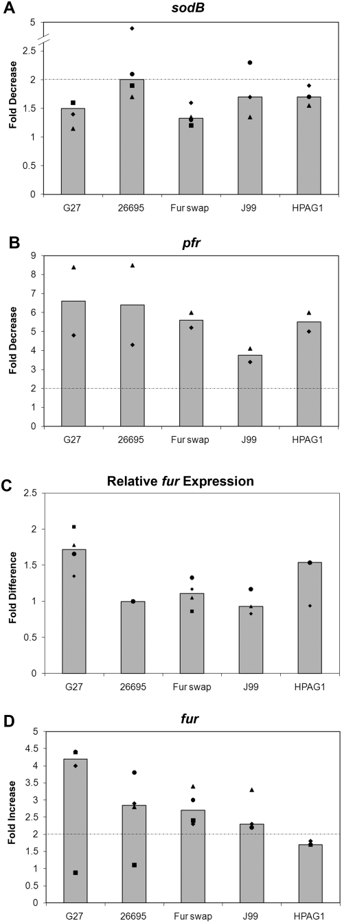 Strain specific differences in sodB regulation. Various H. pylori strains were grown to exponential phase as described in the Materials and Methods , and RNA was isolated from iron replete and iron-depleted shock conditions. RPAs were performed using sodB , pfr , and fur riboprobes and results are displayed in Panels A, B, and D, respectively. Basal levels of fur expression relative to the level of expression in 26695 are depicted in Panel C. Fold decrease in expression for sodB and pfr , fold increase for fur , and relative levels of basal fur expression are plotted as single points for each strain with squares, diamonds, triangles, and circles. Each shape represents a biologically independent set of RNA. Median fold change is represented as a bar for each strain. The dotted-dashed line represents the 2-fold significance cut-off in Panels A, B, and D. In Panel A only, the triangles represent the average of two technical repeats on that independent set of RNA.