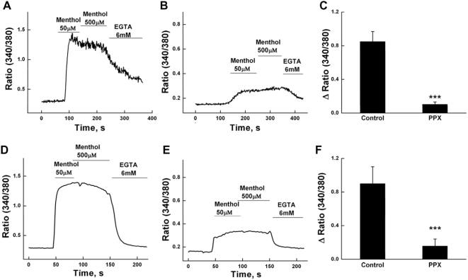 Inhibition of TRPM8 activity by scPPX1 in intracellular Ca 2+ measurements. Upper panels: Fluorescence measurements of intracellular Ca 2+ concentration were performed on HEK-293 TRPM8 stable cell lines with transiently transfected GFP (0.2 µg) alone (panel A) or together with the scPPX1 clone (0.4 µg) (panel B). The summaries of averaged menthol responses are represented in panel C. Lower panels: Fluorescence measurements of intracellular Ca 2+ signals were performed on F-11 neuronal cells with transiently transfected TRPM8 (0.4 µg) and GFP (0.2 µg) (panel D) or together with the scPPX1 clone (0.4 µg) (panel E). The summaries of averaged menthol responses are represented in panel F.