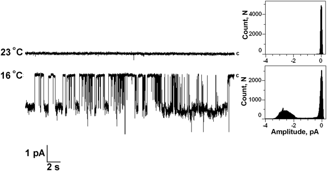 Activation of TRPM8 channels in Planar Lipid Bilayers by cold. Representative current traces of TRPM8 activated by lowering the temperature from 23 to 16°C in planar lipid bilayers: Channels were incorporated in planar lipid bilayers of synthetic POPC, POPE (3∶1) in presence of diC 16 PtdIns(4,5)P 2 . Experimental conditions are the same as described in the legend to Fig. 6 . Channels were inserted cis at 23°C and the temperature was then lowered to 16°C at ∼1 degree per min. Upper trace: TRPM8 activity at 23°C; lower trace: TRPM8 channel activity at 16°C (representative of 12 independent experiments). The temperature of the chambers was controlled by pyroelectric controller (see Experimental Procedures). The temperature in the cis bath (ground) was read directly using a thermoelectric junction thermometer, which also served as a point of reference for the pyroelectric controller. Data were filtered at 50 Hz. Clamping potential was −60 mV.