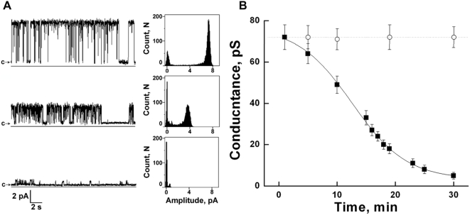 Reduction of TRPM8 channel conductance by exopolyphosphatase scPPX1. A: Representative single-channel current recordings of TRPM8 channels: upper traces – TRPM8 channels recordings before treatment with scPPX1; middle traces – TRPM8 channel recording 15 minutes later after the addition of scPPX1 (2 µg); lower traces – TRPM8 channel recordings after 30 minutes of addition of scPPX1. Clamping potential was +100 mV. Data were filtered at 50 Hz. B: Symbols (▪) (n = 5) correspond to the mean conductance values of scPPX1 treated TRPM8 channels, where 2 µM of scPPX1 were added to the internal side of the channel; (○) (n = 8) mean conductance of control, untreated channels. Experimental conditions are the same as described in the legend to Fig. 6 .