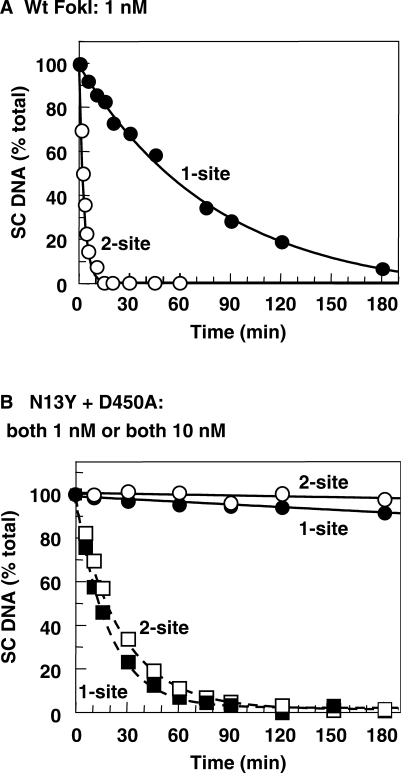 Reaction rates. The reactions, in Buffer 4 at 37°C, contained 5 nM  3 H-labelled DNA and FokI protein at either 1 nM or 10 nM, as indicated below. At timed intervals after adding the protein(s) to the DNA, samples were removed, quenched and analysed as described in Materials and methods section to obtain the concentrations of the SC, OC and LIN DNA. The residual concentration of SC DNA at each time point is given as a percentage of the total DNA in that sample. ( A ) Reactions of 1 nM wt FokI on: pSKFokI (one recognition site), black circles; pIF190 (two FokI sites), white circles. ( B ) Reactions with a mixture of N13Y and D450A, both at 1 nM, on pSKFokI (black circles) and on pIF190 (white circles). Also shown in (B) are the reactions with the mix of N13Y and D450A, both at 10 nM, on pSKFokI (black squares) and on pIF190 (white squares), both with dashed lines.