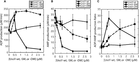 Effects of wild-type and mutant UvsY proteins on ADP and AMP production by UvsX ssDNA-dependent ATPase activity. Velocities of ADP and AMP production were measured by TLC assay as described in Materials and Methods section. All reactions contained 0.45 µM UvsX, 4.5 µM ssDNA and 4 mM α-[ 32 P]-ATP. All other conditions were as described in Materials and Methods section. ( A ) Velocity of ADP production by wild-type UvsX protein as a function of UvsY (closed circles), UvsY-SM (closed squares) or UvsY-DM (closed diamonds) concentration. ( B ) Velocity of AMP production by wild-type UvsX protein as a function of UvsY (closed circles), UvsY-SM (closed squares) or UvsY-DM (closed diamonds) concentration. Note that (B) is plotted on an expanded scale compared to (A). ( C ) ADP/AMP product ratio for wild-type UvsX protein as a function of UvsY (closed circles), UvsY-SM (closed squares) or UvsY-DM (closed diamonds) concentration.
