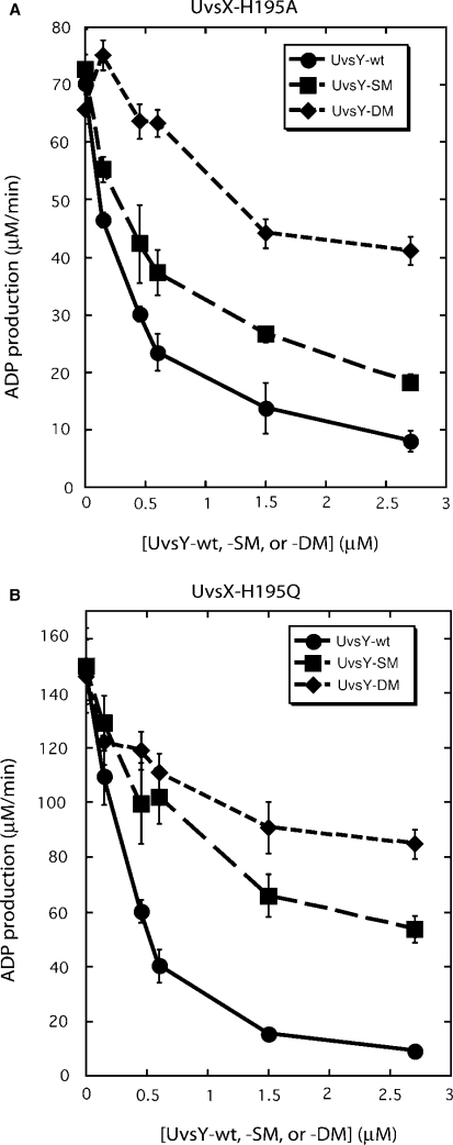 Effects of wild-type and mutant UvsY proteins on ADP production by ( A ) UvsX-H195A mutant and ( B ) UvsX-H195Q mutant ssDNA-dependent ATPase activities. Velocities of ADP production were measured by TLC assay as described in Materials and Methods section. All reactions contained 0.45 µM recombinase, 4.5 µM ssDNA, 4 mM α-[ 32 P]-ATP and variable concentrations of either UvsY (closed circles), UvsY-SM (closed squares) or UvsY-DM (closed diamonds). All other conditions were as described in Materials and Methods section.