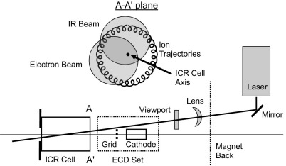 Schematic representation of the geometrical arrangement for electron and IR laser beams in the ICR cell of <t>Thermo-Finnigan</t> <t>LTQ</t> FT. Top: overlap between ion trajectories, electron beam and IR beam in the plane A-A' at the entrance to the ICR cell.