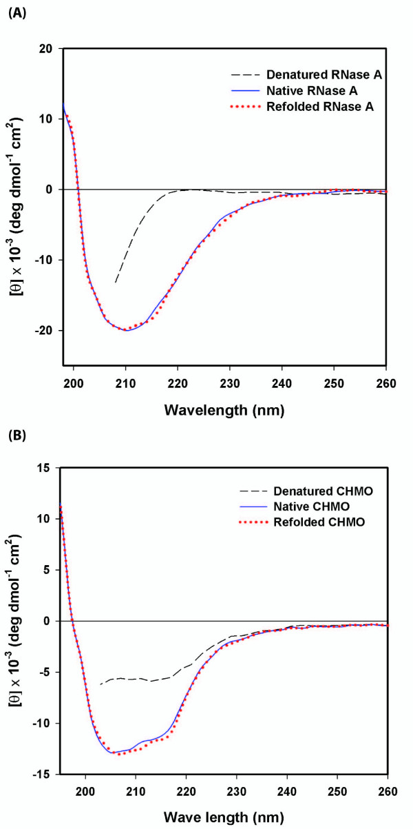CD spectra of RNase A and CHMO refolded with the ternary refolding matrix (mini-chaperone, DsbA and hPPIase) . The CD spectra refolded RNase A (A) and CHMO (B) were compared with those of native and denatured and reduced RNase A and CHMO, respectively. The CD spectra were obtained using a JASCO J-715 in a quartz cuvette with 1 mm path length. RNase A and CHMO refolded by the ternary refolding gel was dissolved in 25 mM sodium phosphate buffer, pH 7.0 at 0.05 mg/ml.