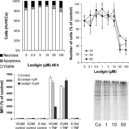 Leoligin is non-toxic for ECs and inhibits TNF-α-mediated VCAM-1 expression. Primary human vascular endothelial cells (ECs) were incubated with the indicated concentrations of leoligin for the indicated times. The upper left diagram shows a representative analysis of cell viability determined by the annexin V/propidium iodide staining and FACS analyses. Values are means of a representative experiment performed in triplicate. The upper right diagram shows EC proliferation as determined by the XTT assay. Values are means of three independent experiments ± SD. The impact of leoligin on TNF-α-induced surface expression of VCAM-1, ICAM-1, and E-selectin (E-Sel) is shown in the lower left diagram. Data shown are mean fluorescence intensities (MFI), % of control, of a representative experiment. The experiment was repeated three times. The lower right image shows a metabolic protein labelling of ECs in the presence of the indicated concentrations of leoligin. The experiment was repeated three times, giving similar results. A representative blot is shown.