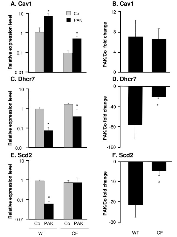 Confirmation of microarray results by real-time RT-PCR . DC from WT and CF mice were infected in vitro with P. aeruginosa for 4 h. RNA levels for three genes were measured by quantitative real-time RT-PCR. Relative expression levels in the samples were calculated using the ΔΔCt method, with GAPDH as internal normalization control. A , C and E . The y -axis represents the relative gene expression level for Cav1, Dhcr7 and Scd2 in the uninfected control DC (gray) and P. aeruginosa infected DC (black). B, D, and F . The y -axis represents fold change of Cav1, Dhcr7 and Scd2 expression upon P. aeruginosa infection compared to the control in both groups. Shown are the means ± SEM of three pairs of DC samples from WT and CF mice with or without P. aeruginosa infection. *denotes p