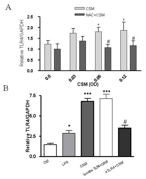 CSM regulates expression of TLR4 via ROS . (A) MDMs (5 × 10 6 cells) were stimulated by CSM (0.03, 0.06 and 0.12 OD) for 4 h with and without pretreatment with NAC (10 mM) for 30 min. RNA was extracted and TLR4 and GAPDH gene expression were quantified by real-time PCR. Results are expressed as copies of TLR4 vs. copies of GAPDH gene. (B) MDMs were preincubated with naturalizing anti-TLR4 or isotype control antibodies for 30 min and then stimulated with CSM (0.06 OD) for 4 h or LPS (100 ng/ml) and mRNA levels of TLR4 was determined by real-time PCR method. Values are expressed as mean +/- S.E.M (n = 3).*P