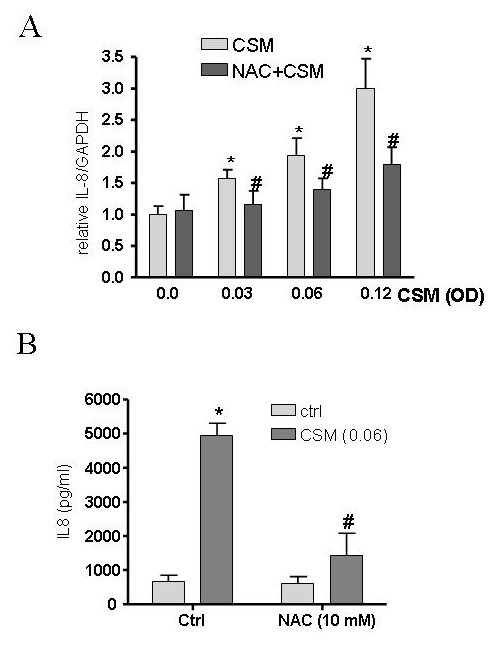 IL-8 expression is ROS dependent after CSM exposure . MDMs (5 × 10 6 cells/ml) were pretreated with NAC (10 mM) for 30 min and then stimulated by CSM (0.03, 0.06 and 0.12 OD) for 4 h. RNA was extracted and mRNA levels of IL-8 were quantified by real-time PCR (A). Results are expressed as copies of IL-8 vs. copies of GAPDH mRNA. (B) MDMs (1 × 10 6 cells/ml) were pretreated with NAC (10 mM) for 30 min and then stimulated by CSM (0.06 OD) for 16 h Supernatants were collected after 16 h incubation and IL-8 production was quantified using ELISA methods. *P