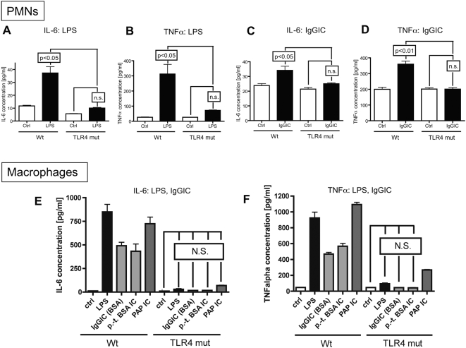 In vitro cytokine responses of elicited peritoneal PMNs and macrophages to LPS and IgGIC. In vitro cytokine responses of elicited peritoneal PMNs (A–D) and macrophages (E,F). Cells (3×10 6 cells/ml) from either Wt or TLR4 mut mice were incubated for 4 hr with LPS (20 ng/ml) or IgGIC; 100 µg/ml), respectively. In addition, macrophages were incubated with polymyxin-treated BSA IgG immune complexes (p.-t. BSA IC, 100 µg/ml) or peroxidase/anti-peroxidase IgGIC immune complexes (PAP IC, 100 µg/ml). (A) IL-6 release from PMNs after LPS stimulation. (B) TNFα levels after incubation of PMNs with LPS. (C) Concentration of IL-6 in supernatants when PMNs were exposed to IgGIC. (D) Production of TNFα by PMNs and macrophages in the presence of IgGIC. Ctrl = control levels of non-stimulated cells. (E) Release of IL-6 by macrophages into supernatant fluids after stimulation with LPS, IgGIC, p.-t. BSA IC, or PAP IC. (F) TNFα production by macrophages exposed to LPS, IgGIC, p.-t. BSA IC, or PAP IC. The experiments were performed in triplicates for each condition (each bar) with n≥3 donors of cells for each mouse strain, Wt or TLR4 mut. Differences between controls and stimulated cells were—if not otherwise noted—statistically significant (p