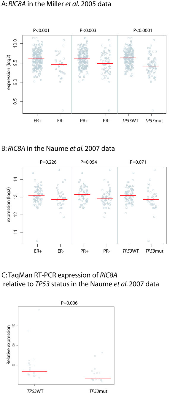 RIC8A expression levels associated with different molecular parameters . A: Gene expression in the Miller et al . 2005 data [ 6 ]: The 251 breast tumours separated based on ER, PR and TP53 status. TP53 mutated group includes all tumours with a signature of TP53 inactivation [ 6 ]. B: Gene expression in the Naume et al . 2007 data [ 7 ]: The 115 breast tumours separated based on ER, PR and TP53 status. C: RIC8A expression by TaqMan qRT-PCR. The 38 tumours separated based on TP53 mutation status. Each square represents the expression level of RIC8A in one tumour. Red bars indicate group medians.