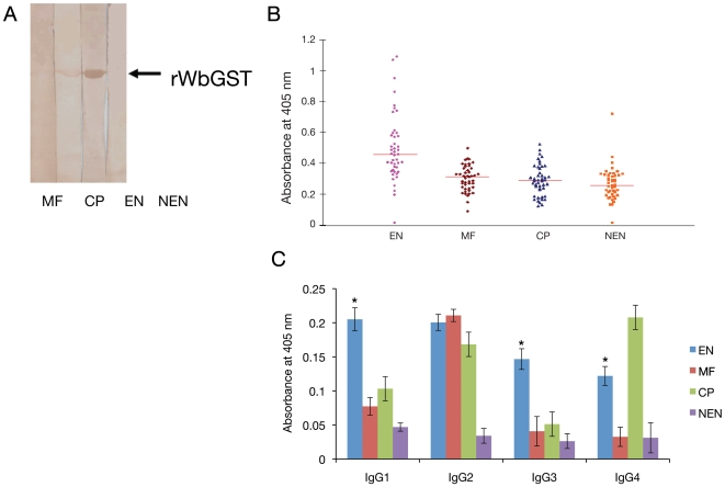 Human immune responses to WbGST. A. Immunoreactivity of rWbGST with sera from different clinical groups of bancroftian filariasis. Approximately 1 µg of rWbGST was resolved on 15% SDS-PAGE, transferred to nitrocellulose membrane and blots were probed with pooled sera from MF, CP, EN or NEN individuals. Results showed strong immunoreactivity with pooled EN sera followed by CP and MF but no reactivity was detected with control NEN sera. Data is representative of one of three experiments using the same sera samples. B. Humoral immune response to rWbGST in human subjects. Total IgG levels against rWbGST in various clinical groups were evaluated by ELISA. Each data point represents single individual absorbance from the four different groups. Horizontal lines represent geometric mean value of EN (43), Mf (45), CP (45) and NEN (39) samples respectively. C. WbGST-specific IgG subclasses in the sera from different clinical groups. Isotype of anti-WbGST IgG antibodies in the sera from various groups of human subjects (EN, MF, CP, TPE and NEN) were evaluated using an isotype-specific ELISA. Data presented is mean±SD value from EN (43), Mf (45), CP (45) and NEN (39). * Significant (p