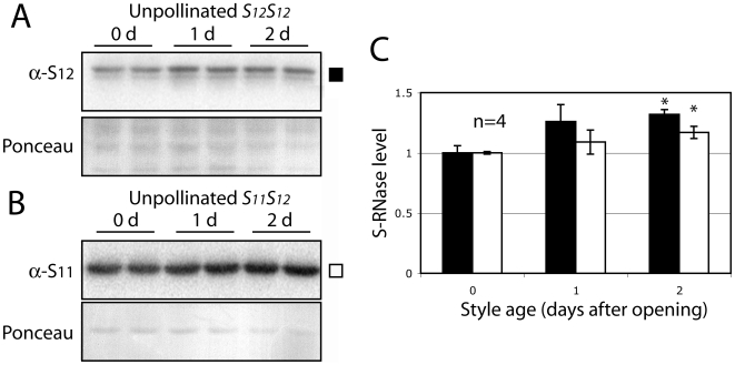 Individual unpollinated styles have similar levels of S-RNase when selected by size and age. The levels of S 12 -RNase in the homozygous S 12 S 12 genetic line 2548 (A) and S 11 -RNase in the S 11 S 12 line 314 (B) were measured by Western blot analysis in styles selected to be of the same size and age. Each lane contains the entire protein extract from one individual style. Antibody reaction was monitored using a radio-iodinated secondary antibody, quantified using a PhosphorImager and reported relative to day 0 (C). Styles at day 2 show significantly higher levels of both S 11 - and S 12 -RNase than styles at day 0. Values are means±s.d. of S 11 and S 12 -RNase levels from 2 independent experiments. Asterisks are significantly different (p