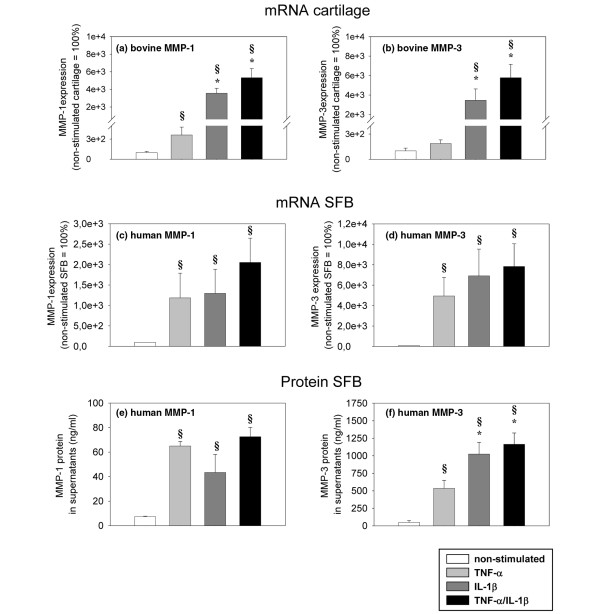 Expression of bovine MMP-1 and MMP-3 mRNA. Cartilage from (a, b) monoculture (n = 5, with two replicates each) and (c, d) human mRNA/protein in synovial fibroblasts (SFB) after co-culture with cartilage (n = 5, with two replicates each) with/without stimulation with TNF-α, IL-1β or TNF-α/IL-1β (14 days) were used.gene expression values (means ± standard error of the mean (SEM)), as determined by quantitiative PCR, are expressed as percentage of the values in non-stimulated samples (100%). In addition, (e, f) the values for human MMP-1 and MMP-3 protein secreted by SFB into the supernatant of co-cultures are shown. The protein levels, as measured in the supernatant by ELISA, are expressed as means +/- SEM. § p ≤ 0.05 Mann-Whitney U Test compared with non-stimulated control; * p ≤ 0.05 Mann-Whitney U Test compared with stimulation with TNF-α.