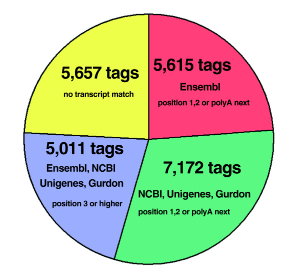 Tag-mapping of experimental tags to X. tropicalis genome and transcript databases. All different experimental tags (23,766 tags) were mapped first to the genome of X. tropicalis and those without a match (311 tags) were discarded from further analysis. The remaining experimental tags that presented one or more matches to the genome (23,455 tags; 100%) were then mapped to the Ensembl modified database, and only those tags found in the first or second positions from the 3'-end of the RNA sequence or belonging to the <t>polyA-next</t> category (see Materials and methods for details) were selected and reported as mapping to this transcript database (5,615 tags; 23.9%; red). The remaining tags that did not exhibit a match to the transcripts in the Ensembl modified database (17,840; 76.1%) were then searched with the same restraints mentioned above in the joint set composed of the NCBI <t>(mRNAs),</t> Unigene (clusters of mRNAs and ESTs) and Gurdon databases (clusters of ESTs). A total of 7,172 tags (30.6%) were found to match to positions 1, 2 or poly-A next in the transcripts from this set (green). The remaining tags without a match to these databases (10,668; 45.5%) were then re-mapped against the complete set of transcripts (a complete joint set of RNAs composed of Ensembl, NCBI, Unigene and Gurdon databases), but with the restraint that the mapping must occur to position 3 or above in a transcript. A total of 5,011 tags (21.4%) that fulfilled these conditions were obtained (blue). The remaining 5,657 (24.1%) tags mapped to the genome, but did not map to any known transcript (yellow).