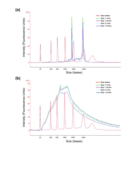 Bioanalyser electropherograms of total RNA isolated from PAXgene ™ collected whole blood and subsequently synthesised sscDNA probes (a) Bioanalyzer electropherograms of a representative RNA from each experimental group are shown. (b) sscDNA quality assessed by distribution of size. The majority of sscDNA synthesised is in the order of approximately 1000 nucleotides. Bioanalyzer electropherograms of a representative sscDNA from each experimental group are shown. x-axis represents nucleotide length and y-axis is arbitrary signal intensity fluorescence units.
