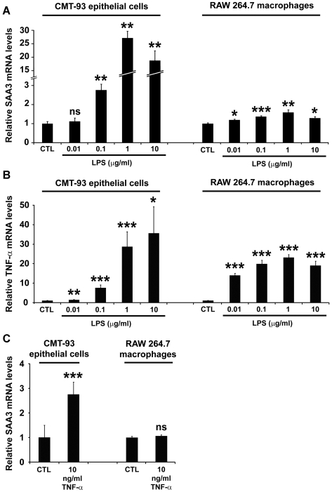 LPS induces SAA3 and TNF-α mRNA expression in CMT-93 colonic epithelial cells and RAW 264.7 macrophages. (A) qRT-PCR analysis of SAA3 mRNA expression levels in CMT-93 cells and RAW 264.7 macrophages after 1 h LPS at the indicated concentrations. (B) qRT-PCR analysis of TNF-α mRNA expression levels in CMT-93 cells and RAW 264.7 macrophages after 1 h LPS at the indicated concentrations. (C) SAA3 mRNA expression levels in CMT-93 cells and RAW 264.7 macrophages after 1 h treatment with recombinant TNF-α (10 ng/ml). n = 6 biological replicates per treatment. * P