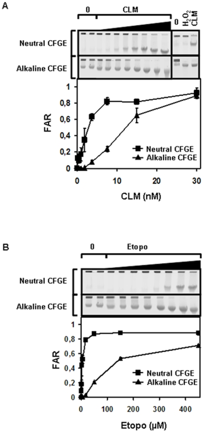 Strand breaks induced by etoposide and CLM. SV40-transformed fibroblasts treated with (a) CLM (0–30 nM) or (b), etoposide (0–450 µM) for 40 min at 37°C. The induced levels of TSBs and DSBs were measured with neutral and alkaline CFGE. As a control, we also treated cells with the SSB-inducer H 2 O 2 (200 µM) or DSB and SSB inducer CLM (15 nM) to demonstrate that neutral CFGE fails to detect SSBs (a, separate gel). Error bars represent variation in two separate experiments performed on two different days.