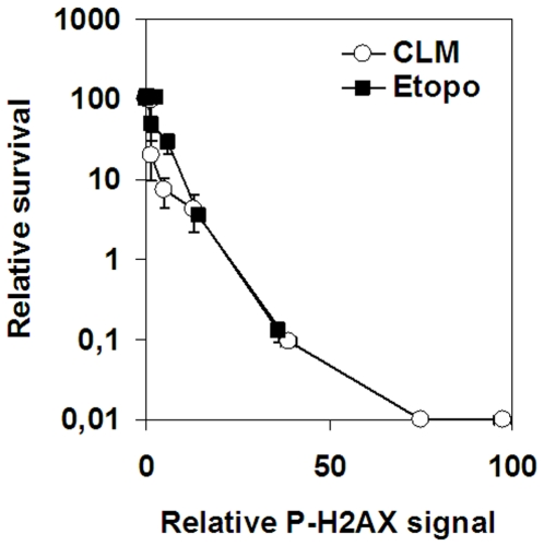 Cell survival and H2AX phosphorylation in response to etoposide or CLM. SV40-transformed fibroblasts were treated with 0–150 µM etoposide or 0–5 nM CLM before analysis of colony survival and H2AX phosphorylation. Error bars represent variation in two separate experiments performed on two different days.
