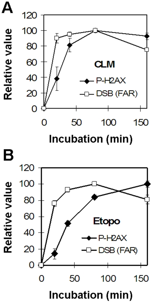 Time-dependent induction of DSBs and H2AX phosphorylation. Analysis of DSBs and H2AX phosphorylation in SV40-transformed fibroblasts treated with 3 nM CLM (a) or 250 µM etoposide (b) for 0, 20, 40, 80 or 160 minutes at 37°C before analysis of DSBs with neutral CFGE and H2AX phosphorylation. Error bars represent variation in two separate experiments performed on two different days.