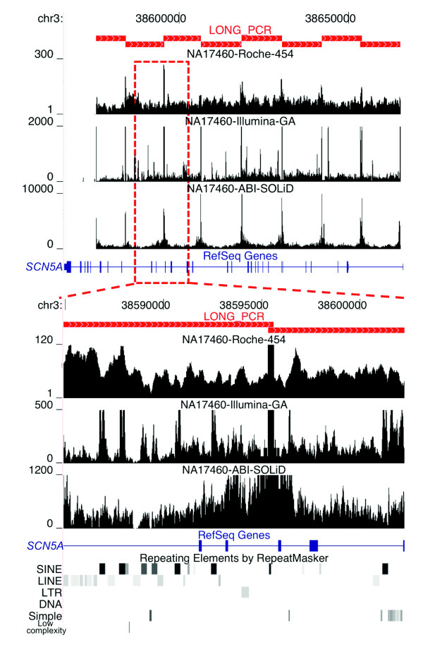 Non-uniform per-base sequence coverage. The 100-kb interval on chromosome 3 encoding the SCN5A gene (blue rectangles and joining lines) was amplified using eight LR-PCR amplicons (red filled rectangles in upper panel). On the y-axis, the fold sequence coverage scale is shown for each platform. The upper panel shows that amplicon end sequences are highly overrepresented. The y-axis was set to show the relative fold coverage of the sequences in the interval and therefore does not accurately represent the maximum fold coverage of the amplicon ends, which was 311, 195,473, and 15,041 for Roche 454, Illumina GA, and ABI SOLiD, respectively, in the sample shown. The lower panel shows the non-uniformity of sequence coverage across an approximately 17-kb region encompassing four exons of SCN5A . The locations of the repetitive elements (lower black/gray rectangles) in the interval are shown.