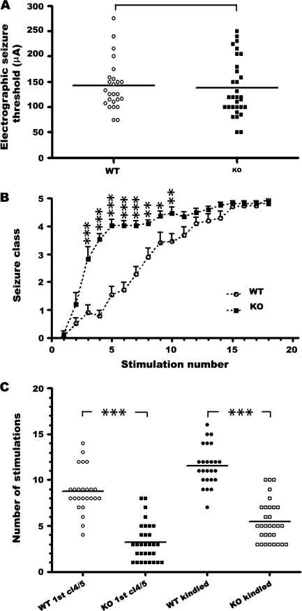 Striking acceleration of kindling development in Fmr1 KO mice. ( A ) No significant difference between WT and Fmr1 KO in mean EST is observed; P = 0.77, unpaired t -test. ( B ) Behavioral seizure intensities (class 1–5) evoked by amygdala stimulation at the predetermined EST, presented as mean ± SEM of WT mice ( n = 25) and Fmr1 KO mice ( n = 31). ( C ) Number of stimulations required to provoke the first episode of class 4/5 seizure and third consecutive episode of class 4/5 seizure in WT mice ( n = 25) and Fmr1 KO mice ( n = 31) mice; *** P