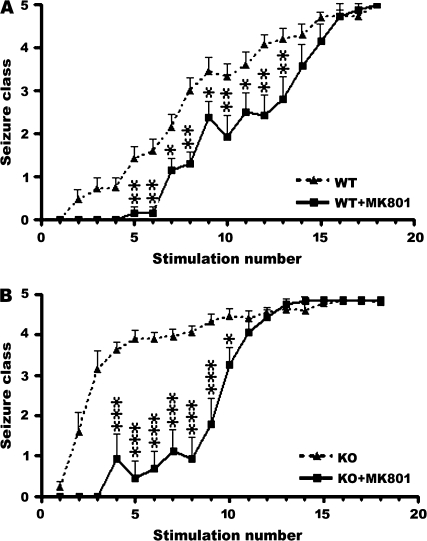 Effects of the NMDA antagonist MK801 on kindling development in WT and Fmr1 KO mice. ( A ) Behavioral seizure intensities evoked by amygdala stimulation at the predetermined EST, data presented as mean ± standard error of the mean (SEM) of saline-treated WT ( n = 25) and MK801-treated WT mice ( n = 13). ( B ) Behavioral seizure intensities evoked by amygdala stimulation at the predetermined EST, data presented as mean ± SEM of saline-treated ( n = 31) and MK801-treated Fmr1 KO mice ( n = 13). MK801 significantly slowed kindling development in both WT mice and Fmr1 KO mice. Saline or MK801 was administered 30 min before each stimulation. Asterisks indicate statistically significant differences in the average behavior seizure class at the indicated time point between the 2 presented groups. * P