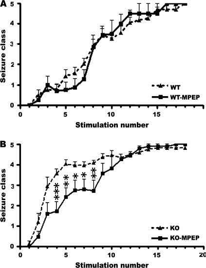 Effects of the mGluR5 antagonist MPEP on kindling development in WT and Fmr1 KO mice. ( A ) Behavioral seizure class evoked by amygdala stimulation at the predetermined EST, data presented as mean ± standard error of the mean (SEM) of saline-treated ( n = 25) and MPEP-treated WT mice ( n = 15). There is no significant difference between kindling development in WT mice treated with MPEP compared with controls. ( B ) Behavioral seizure class evoked by amygdala stimulation at the predetermined EST, data presented as mean ± SEM of saline-treated ( n = 31) and MPEP-treated Fmr1 KO mice treated ( n = 13). Administering MPEP to Fmr1 KO mice significantly represses seizure intensities at the fourth through eighth stimulation point. Saline or MK801 was administered 30 min before each stimulation. Asterisks indicate statistically significant differences in the average behavior seizure class at the indicated time point between the 2 presented groups. * P
