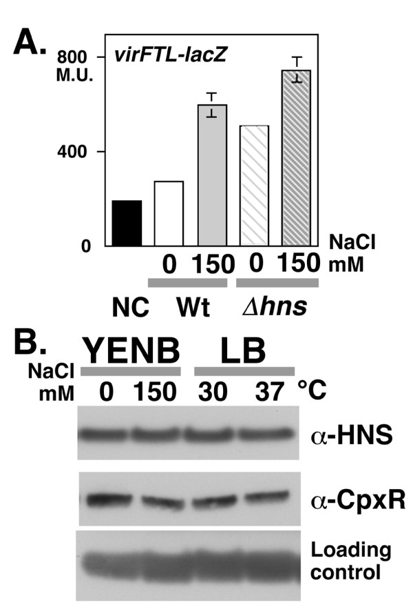 A. Reporter assay of virF promoter activity in an hns mutant . An hns deletion mutant of S. sonnei strain MS4841 carrying virFTL-lacZ (striped bars) was grown in <t>YENB</t> media with or without 150 mM <t>NaCl</t> were subjected to the β-galactosidase assay. For a comparison of activities, the data from Figure 1C, Graph 1, which was derived from simultaneous assays, is indicated by three solid bars on the left side of the graph. Strain and concentration of NaCl are indicated at the bottom of the graph as follows: Wt, wild-type strain (solid bars); hns , hns deletion mutant (striped bars); YENB medium, 0 (white bars); YENB medium with 150 mM NaCl, 150 mM (gray bars). B. Western blot analysis of H-NS and CpxR expression . An overnight LB culture of MS390 at 30°C was inoculated into fresh media and then the cells were cultured until they reached mid-log phase ( A 600 = 0.8). Media, temperature (YENB at 37°C; LB at 30°C and 37°C) and the concentration of NaCl are indicated on the top of the panel. Antibodies used for detection are indicated on the right side of the panels. A cross-reactive unknown protein detected by the anti-H-NS antiserum was used as a loding control.