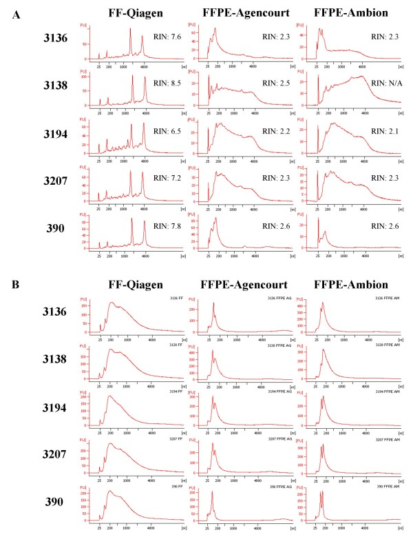 Bioanalyzer profiles of total RNA (A) and cRNA (B) of matched FF and FFPE ovarian serous adenocarcinoma samples 3136, 3138, 3194, 3207 and 390 . The method used for RNA extraction (Qiagen, Agencourt, Ambion) is indicated for each sample type. The RNA Integrity Number (RIN) is shown next to each total RNA profile.