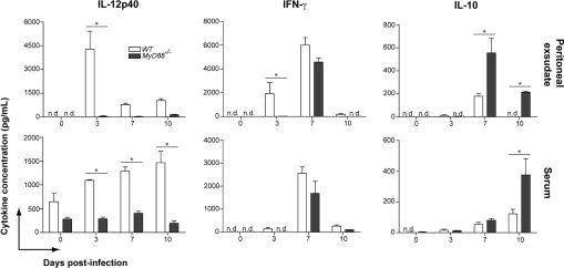 MyD88 is responsible for the early induction of Th1-related cytokines after N. caninum infection. The presence of IL-12p40, IFN-γ, and IL-10 was evaluated by ELISA in the peritoneal exudate and serum samples of uninfected, and infected WT and MyD88 −/− mice at 3, 7, and 10 days p.i. ( n = 3 mice/group/date). Data are representative of two independent experiments. * Indicates significant statistical differences (mean ± SEM, p