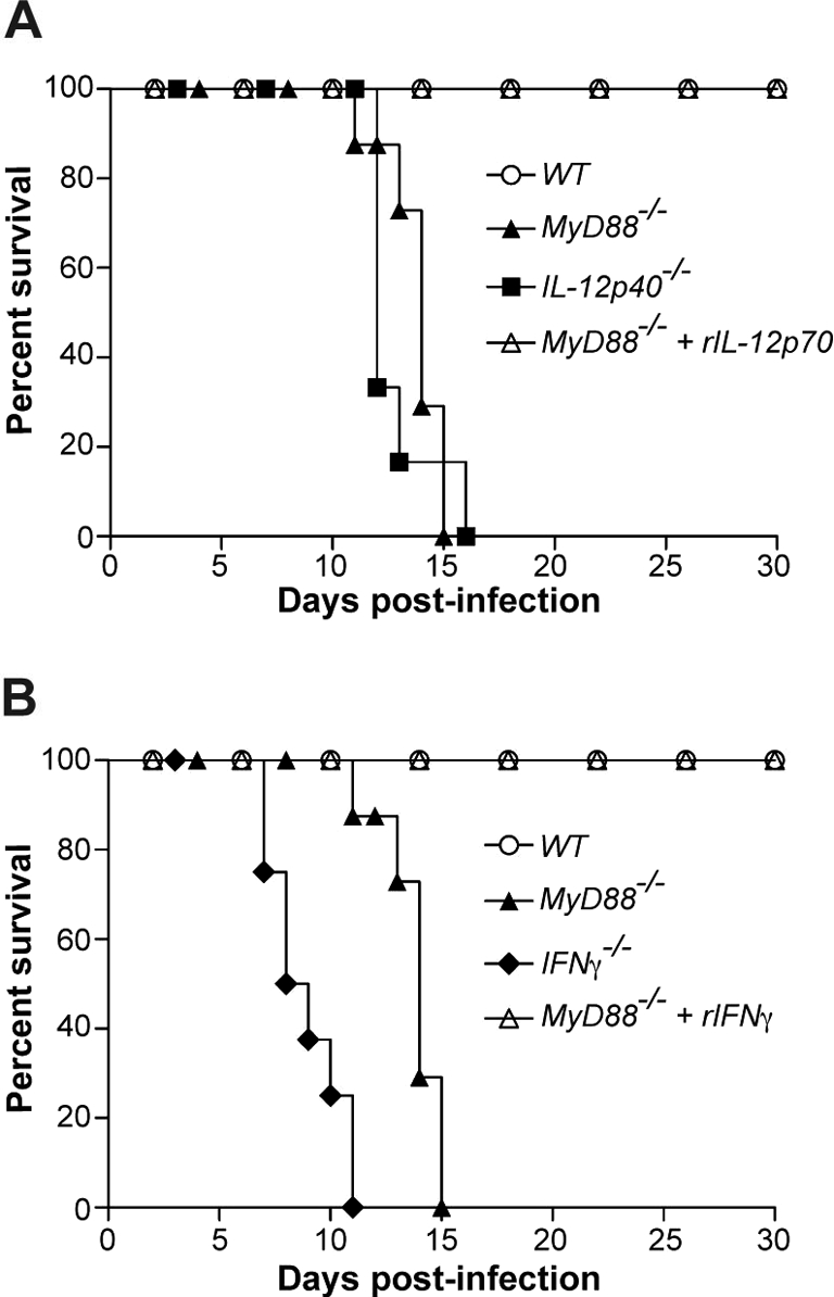 Replenishment of IL-12 and IFN-γ reverts susceptibility of MyD88 −/− mice to acute N. caninum infection. Survival curves of (A) WT, IL-12p40 −/− , MyD88 −/− and MyD88 −/− mice treated with rIL-12p70 or (B) WT, IFNγ −/− , MyD88 −/− and MyD88 −/− mice treated with rIFNγ ( n = 6 mice/group), infected at the same time with sub-lethal parasite doses. Survival was observed through a 30-day period. Data are representative of two independent experiments.