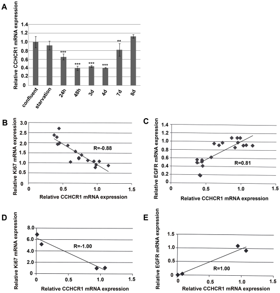 Expression of CCHCR1, Ki67, and EGFR in HaCaT cell proliferation assay. A) Relative expression of CCHCR1 mRNA (as measured by TaqMan) at different time points (from 24 h to 8 d) after releasing the cells from serum starvation and high density culturing. Expression of CCHCR1 did not differ between confluent (control) cells and quiescent (starved) cells. Control cells expressed CCHCR1 2.5-fold more than proliferative HaCaT cells (24–48 h, 3–4 d). As confluency was reattained (8 d), the expression of CCHCR1 increased to the level of the control cells. B) Correlation between relative CCHCR1 and Ki67 expression levels. When CCHCR1 mRNA expression levels were compared to those of Ki67, a negative correlation was seen, confirming the proliferative status of the HaCaT cells. C) EGFR mRNA expression correlated with CCHCR1 mRNA expression. D) Correlation between CCHCR1 and Ki67 expression in the experiment with lower cell density. The negative correlation of CCHCR1 expression with Ki67 expression was even more profound as relative CCHCR1 mRNA decreased near to zero in the two control cells. E) Correlation between CCHCR1 and EGFR expression in the experiment with lower cell density. Here again, CCHCR1 expression correlated with EGFR expression. TaqMan PCR results are shown relative to mRNA levels from corresponding control cells assigned the value 1. Expression levels of CCHCR1, Ki67, and EGFR in HaCaT cells were normalized to the GAPDH mRNA levels in the same samples. * p
