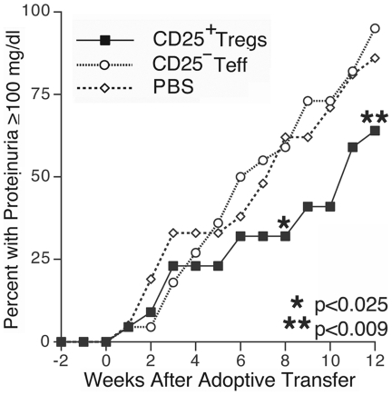 Inhibition of proteinuria in T reg treated mice. Mice receiving adoptively transferred T regs had significantly reduced progression to proteinuria ≥100 mg/dl over the 12 weeks following transfer as compared to either PBS or CD4 + CD25 − T cell control groups (p≤0.025 starting week 8, n = 22 for T reg and T eff groups, n = 21 for PBS group).